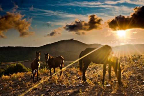 Tolfa,Allumiere,Civitavecchia,cavalli,tramonto,sole,stella,pascolo