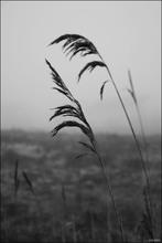 Mini_120222-153425-wheat