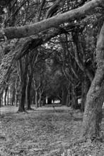 Mini_120301-130804-trees_near_phoenix_park_school_3