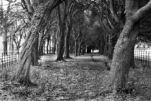 Mini_120301-135008-trees_near_phoenix_park_school_2
