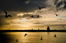 Mini_120304-152422-3_sunset_silhouette
