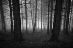 A walk through the foggy forest in Heidelberg, Germany