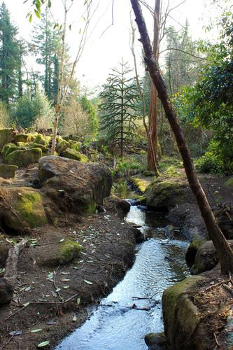 Spring Stream - Altamont Gardens, Co. Carlow