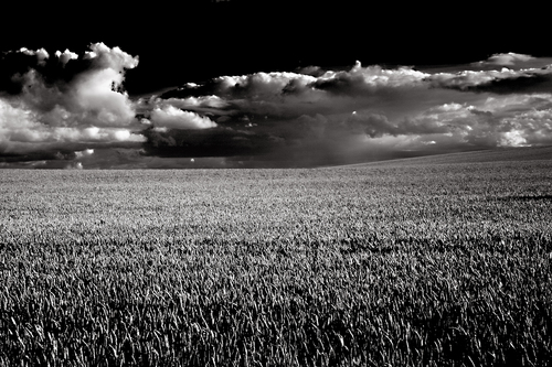 Summer storm clouds roll in over the crop fields of North Kildare. Ireland.