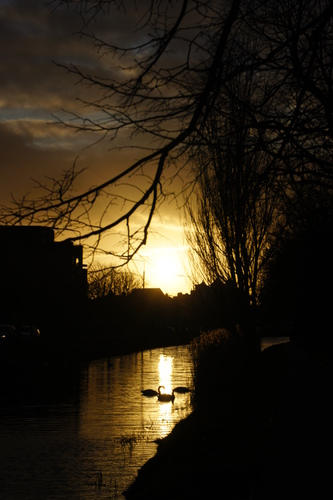 Golden Sun Setting on swans in The Grand Canal