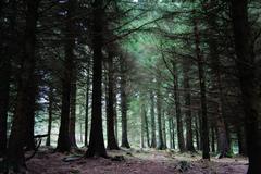 Fairy Castle Loop Trail Forrest in Ticknock Dublin Mountains