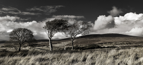 Tree's, Sally Gap, Co Wicklow, Ireland.