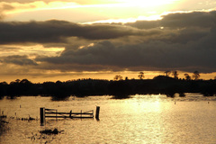 This was taken on a cold winters evening, it had been raining for quit a few day and the bogs at Townspark were flooded.