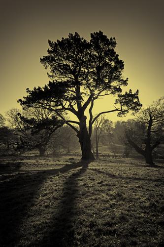A view through Castlewellan Forest Park.