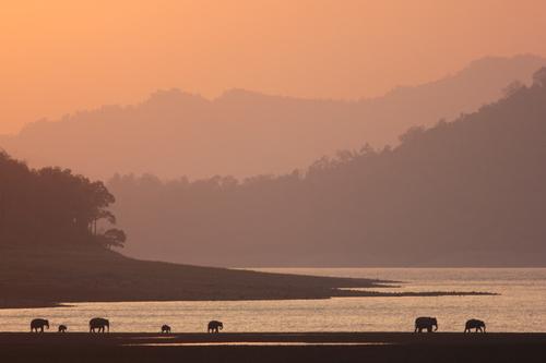 Elephants at Dhikala, Corbett NP, India