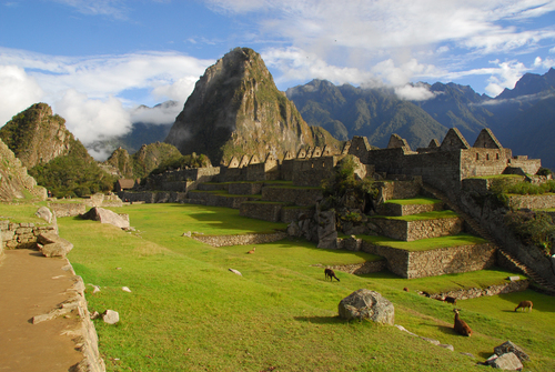 Llamas grazing on the lush grass of the ruins.