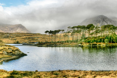 Pine Island located on Derryclare Lake in the beautiful area of Connemara, Co Galway Ireland.