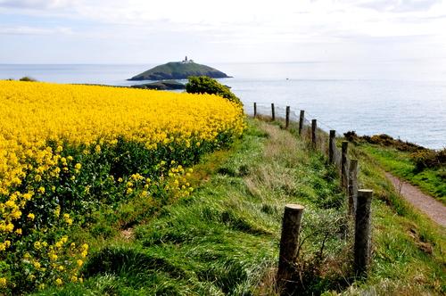 Taken in summer 2012 through the field of t rape seed flower on the beautiful cliff walk in Ballycotton Co Cork