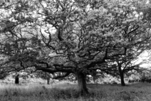 Mini_120707-134129-oakwood_forest