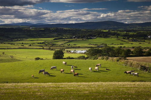 Cows, fields,wind turbines. Rural Ireland. This is a valley north of Skibbereen which I came across recently when following a very narrow road/track off the main road. One of a set of 7 which I combined into a panoramic shot. When will Lokofoto enable panoramas?