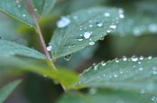 Mini_120814-130155-waterdops