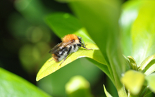 Mini_120814-130831-garden_bee