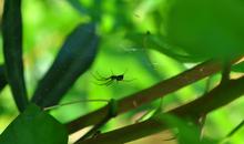 Mini_120814-132153-garden_spider