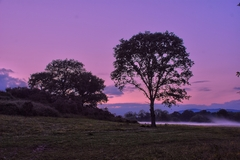 A mist rises from the River Foyle at Silversprings in Mooncoin, County Kilkenny, Ireland.