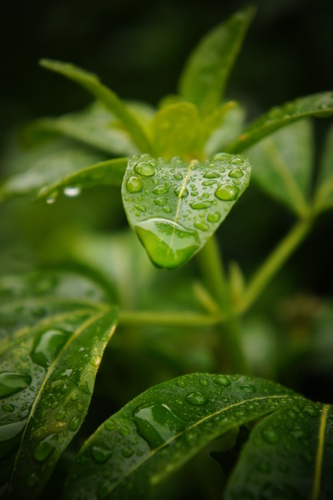 Macro shot of water dropping of leaves after a typical rainy day in Ireland