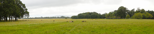 Panoramic shot of deer grazing in the Phoenix Park