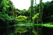 Mini_trees_by_lake__the_phoenix_park_