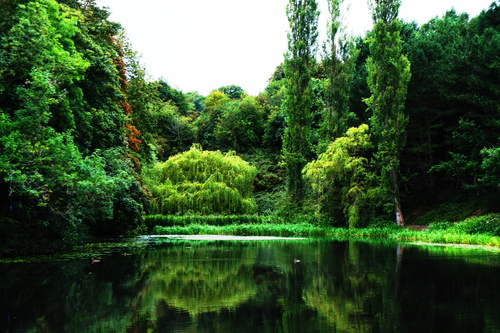 Some Colourful trees by a pond/lake in the Phoenix Park Dublin.