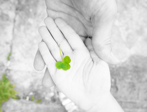 A selective colour shot of a Shamrock my son picked up in the Garden.