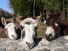 Mini_121004-202316-donkeys