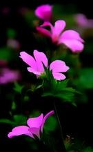 Mini_121002-112806-flowers