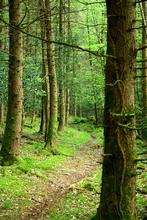Mini_121103-102824-woods