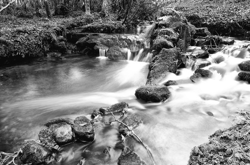 A long exposure on water running through a stream at my local forest.  Downhill Forest is a beautiful location for photography....at Castlerock, Northern Ireland.