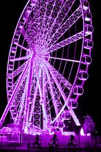 Mini_purple_bears