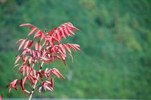Mini_121106-160907-2012.11.autumn.kumano011