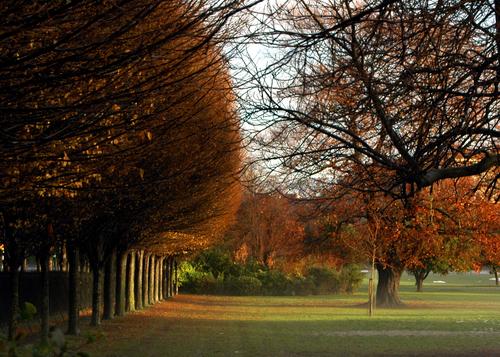 Autumn sets in at Herbert Park, Donnybrook, Dublin.