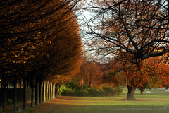 Autumn sets in at Herbert Park, Donnybrook, Dublin.
