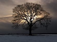 Mini_130121-001253-one_tree__one_sky__one_sun