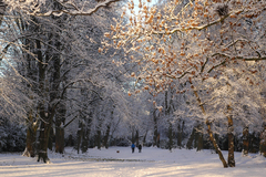 Winter in Herbert Park.
