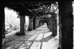 The beautiful pergola in Herbert Park that has since been taken down.