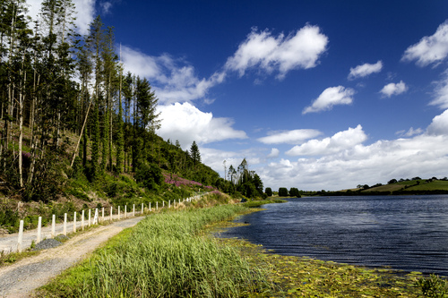 Lough Money, just outside Downpatrick, on a sunny summers morning.