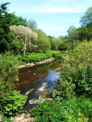 This image was taken at the back of the Tannery in Portlaw. An area where at one time many Portlaw people used to both swim and fish before of course the layout of the river was unfortunately changed.