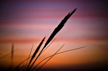 Mini_130211-225119-january_sunset