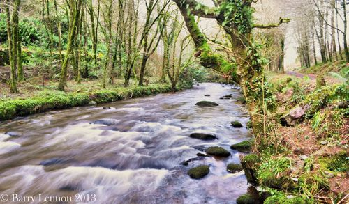As it flows through the colligan woods, Co. Waterford, Ireland.