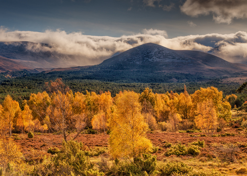 Morning light in the Cairngorms.