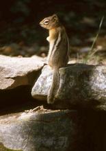 Mini_130219-233924-squirrel_1