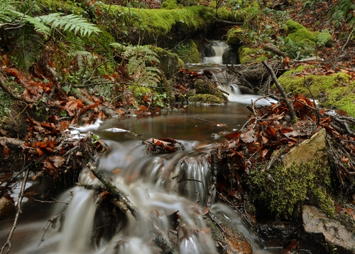A brook flows through the Glen of Aherlow, Co Tipperary, Ireland