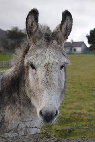 A friendly donkey I met in Murrisk