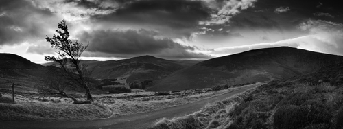 Above Lough Tay, Co. Wicklow. Another panorama, a format which I have been trying out recently. A freezing cold day overlooking Luggala in the Wicklow mountains, with my gluey feet sinking into the boggy ground, and the wind trying to cut me into several pieces. I felt a bit like that tree!