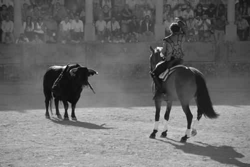 A Matador challenges a bull.