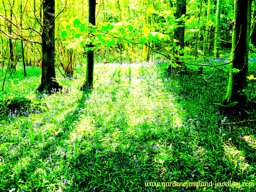 Bluebell Forrest in Springtime, Kent, United Kingdom, Elham Valley, green, trees, bluebells